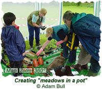 Making meadows in a pot