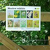 Meadow wildlife guide